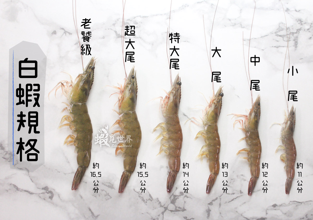 白蝦規格1-1.jpg