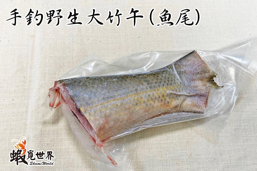 手釣野生大竹午魚尾