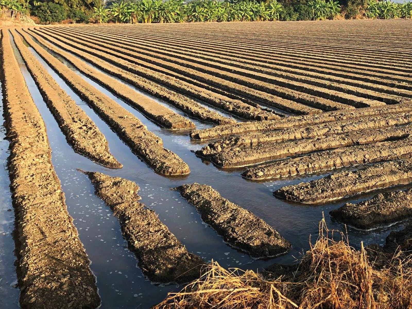 農場作息與毛豆種植過程